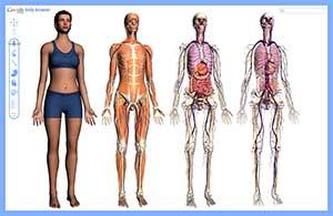 Интегрированное занятия по развитию лексико-грамматической стороны речи в средней группе «Исследуя своё тело»