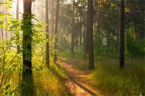 Интегрированная НОД по образовательной области «Социально-коммуникативное развитие» в группе оздоровительной направленности для детей 3-4 лет Тема: «Прогулка в лес»