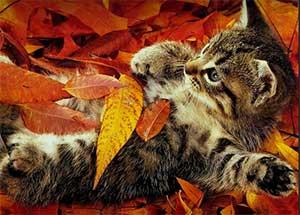 Занятие - викторина на тему: «Прощание с осенью»