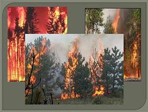 Сценарий развлечения по правилам пожарной безопасности «Пожар в лесу»