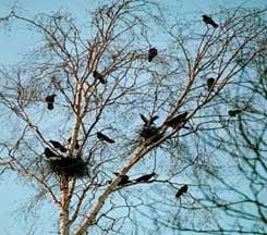 Конспект досуга в старшей группе «Пришла весна, прилетели птицы»