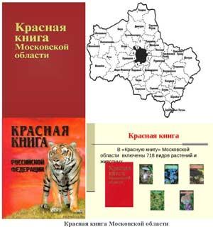 Конспект беседы с детьми по страницам Красной книги Подмосковья