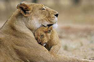 Стихи о животных для самых маленьких и не очень