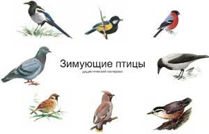 «Какие птицы прилетают к нам зимой»