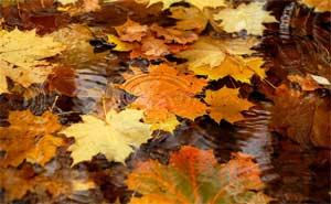 Конспект интегрированного занятия по ознакомлению с окружающим миром и художественной деятельностью в подготовительной группе Гостья — Осень
