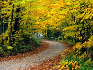 ООД «Осеннее путешествие»
