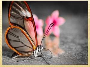 Презентация о насекомых  Хозяйка луга
