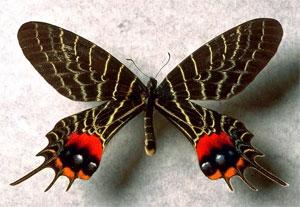 Проект «Волшебный мир насекомых»