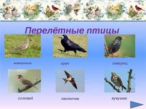 Открытое занятие «Перелетные птицы» для старших групп
