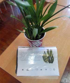 Создание и использование дидактического материала «Экологические паспорта растений» для занятий с детьми старшего дошкольного возраста в ДОУ