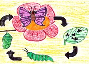 Конспект экологической прогулки с детьми среднего дошкольного возраста (4 — 5 лет) «Проказы Шапокляк в стране насекомых»