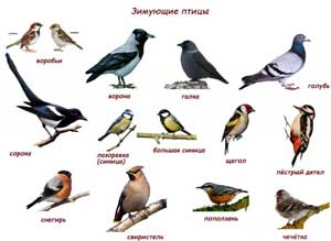 Технологическая карта занятия по ознакомлению с окружающим и развитие речи «Зимующие птицы наших лесов»