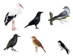 Конспект НОД в подготовительной к школе группе «Юный орнитолог». Тема: «Перелетные птицы».
