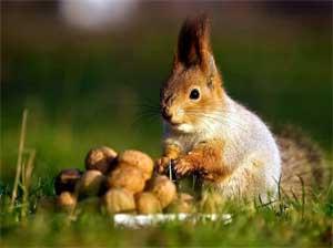 «Осенние заботы животных» — конспект непосредственно образовательной деятельности в средней группе детского сада.