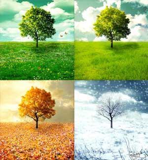 Наблюдение в природе по временам года в подготовительной группе
