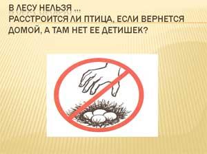 Презентация Правила поведения в лесу