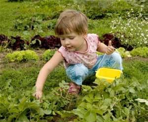 Конспект занятия «Вот веселый огород, что здесь только не растет»