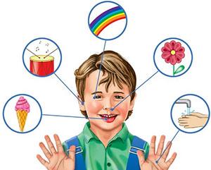 Конспект НОД Наши помощники-органы чувств средний дошкольный  возраста