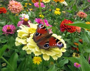 НОД «Царство растений: лекарственные травы»