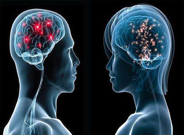 Нейронаука. Различия мужского и женского мозга