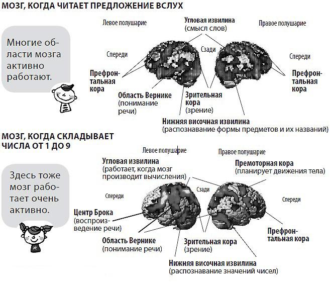 тренировка мозга