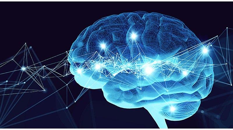 эрудиция и мозг