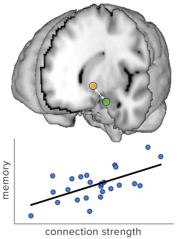 нейронаука, нейропсихология