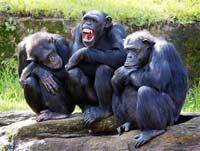 секс у обезьян