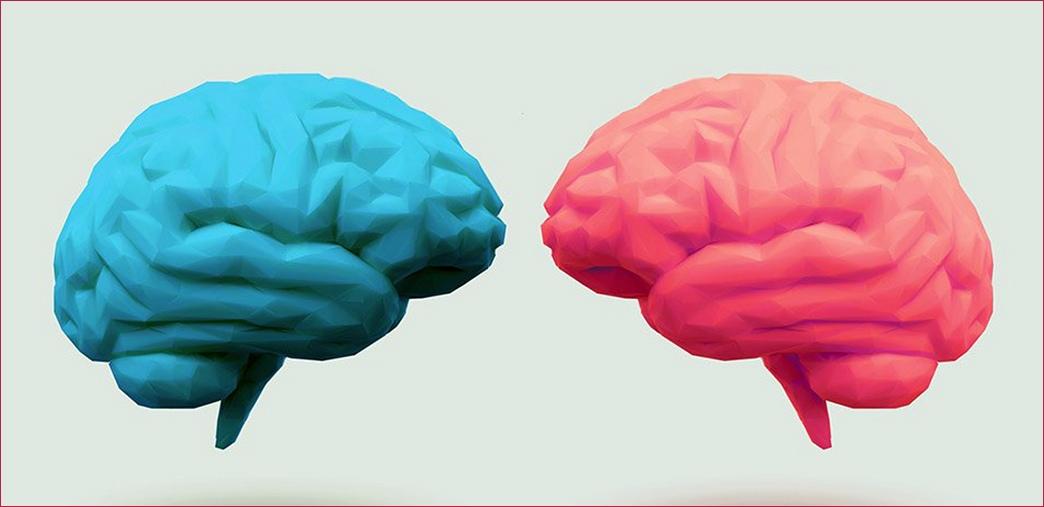 различие мужского и женского мозга