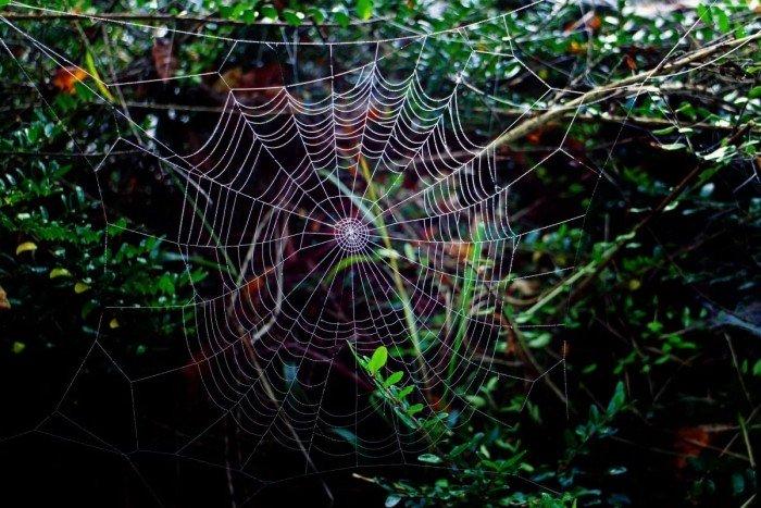 Паучьи сети и долги рода когда вы хотите одно а делаете другое или бессильны сделать и страдаете